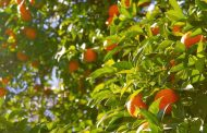 Fruto do Espírito